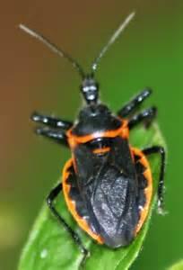 garden flies pest identifying garden pests and bugs in ontario the