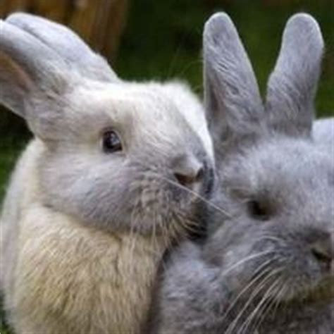 Health And Welfare Background Check Indoor Rabbit Cage Uk On Indoor Rabbit Cage Rabbit Cages And House Rabbit