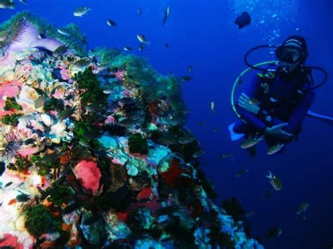 12 best diving spots in the world for the water baby in you