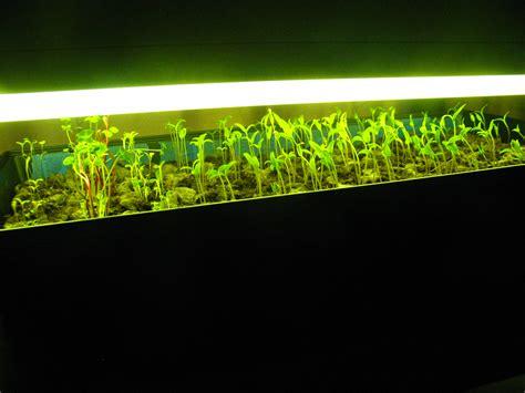 inexpensive grow light shelf unit for seedlings the