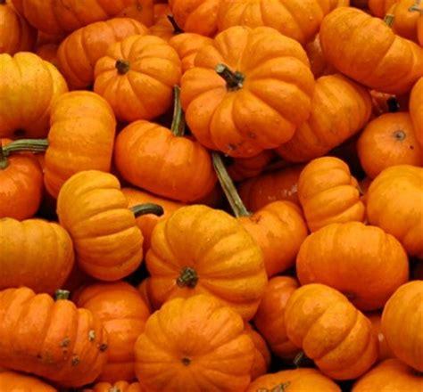 Hm Baby Paket Isi 2 benih baby pumpkin