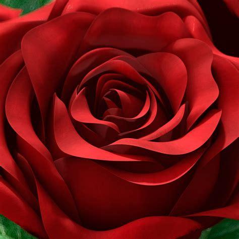 imagenes en 3d rosas imagenes rosas 3d imagui