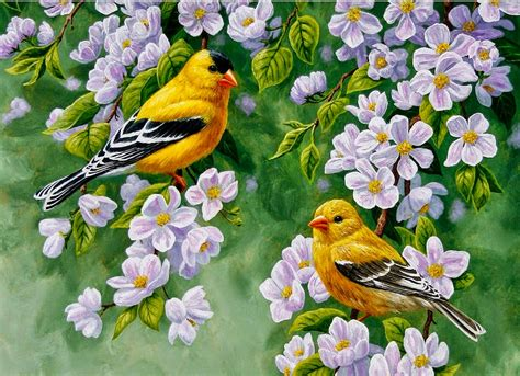 fotos en cuadros im 225 genes arte pinturas flores y pajaros cuadros pintados