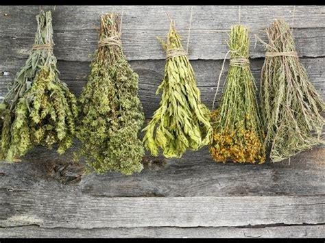 dry herbs youtube