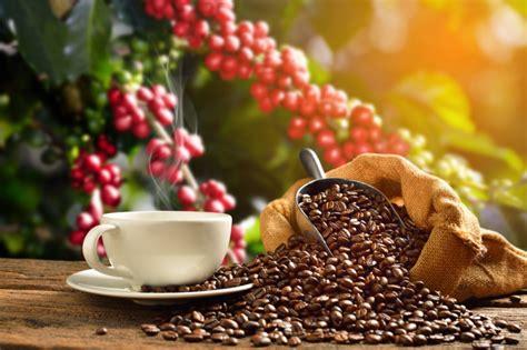 pianta di caffe in vaso come coltivare la pianta caff 232 in vaso fai da te mania