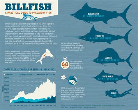 sailfish vs boat swordfish vs marlin vs sailfish