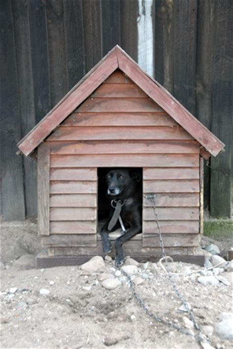 how do you build a dog house how do i build a dog house step by step ehow