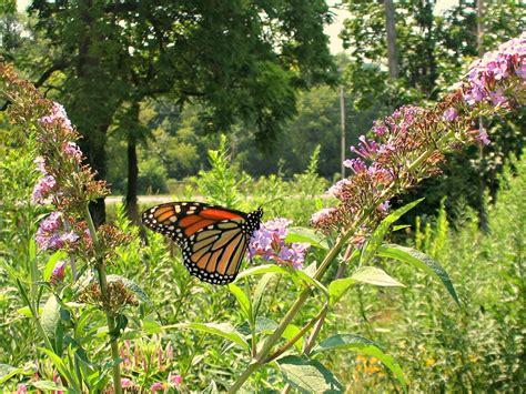 Butterfly Gardens by Dundas Valley Outdoors Urquhart Butterfly Garden A