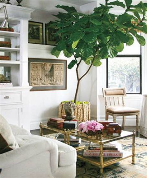 Living Room Decorating Ideas With Plants Decorating Living Room With Plants Modern House