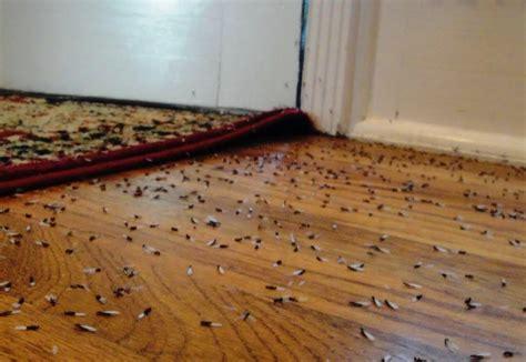 identify termites