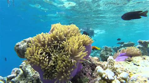 best snorkeling maldives best snorkeling maldives resorts in 2017 explore the