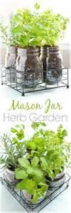 growing herbs inside mason jar herb garden