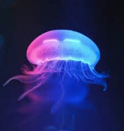 4 designer colorful jellyfish