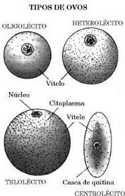 Filipe Carthagenes Biologia: RESUMO DE EMBRIOLOGIA