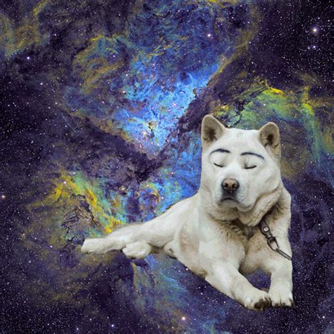 puppies in space dogs in space
