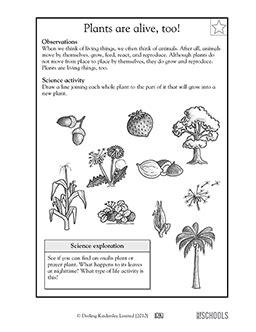 Is It Alive Worksheet by 1st Grade 2nd Grade Kindergarten Science Worksheets Plants Are Alive Greatschools