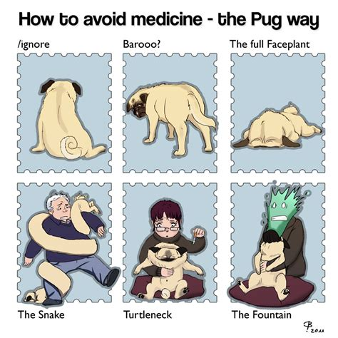 kennel cough in pugs pug hates medicine by engelszorn on deviantart