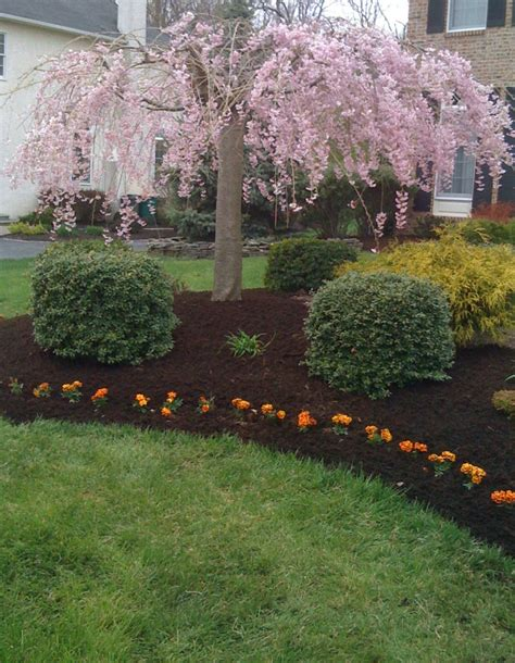 mulch bed ideas landscaping around trees tree mulched flower bed c o