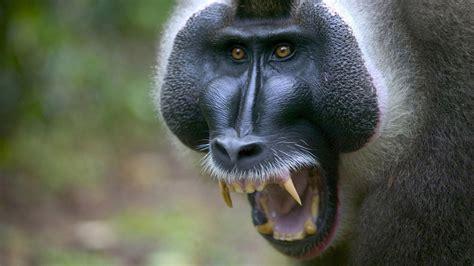 imagenes se animales imagenes animales omn 237 voros chainimage