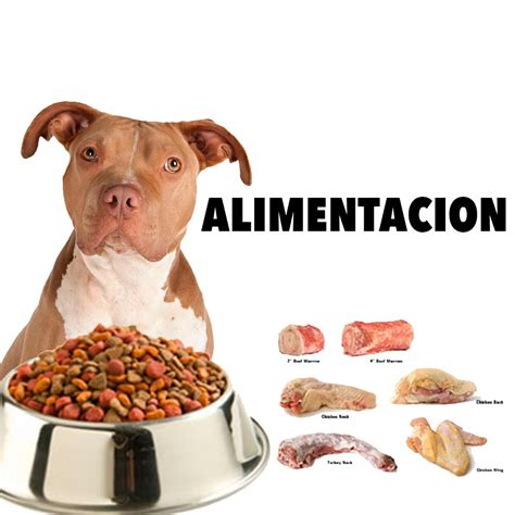 alimentos para perros pitbull cachorros 4 patas - Alimento Para Pitbull