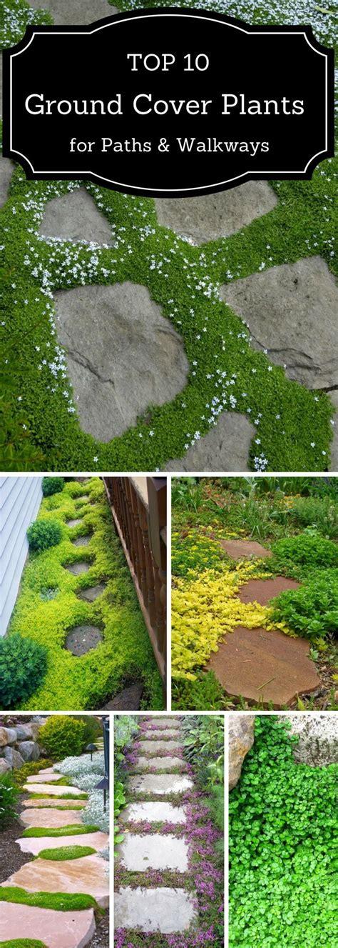 de 25 bedste id 233 er inden for ground cover plants p 229 pinterest