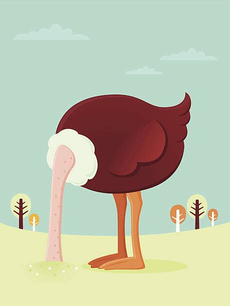 ostrich illustrations royalty  vector graphics clip