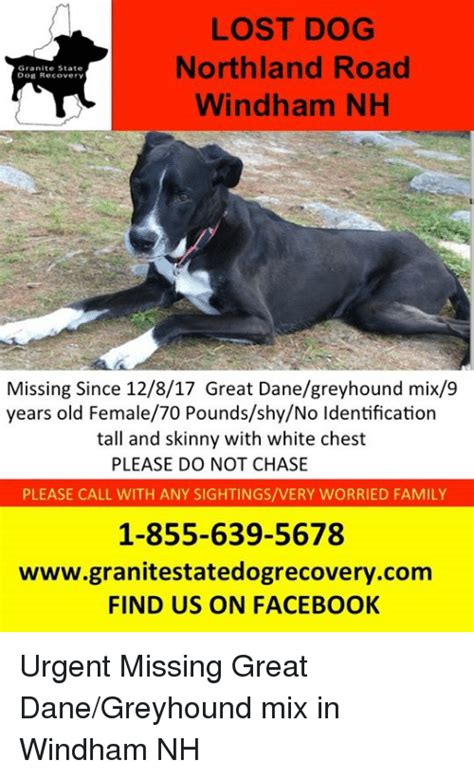 Lost Dog Meme - lost dog northland road windham nh granite state dog
