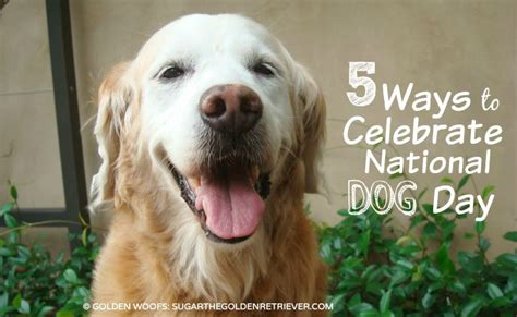 national golden retriever day 5 ways to celebrate national day golden woofs