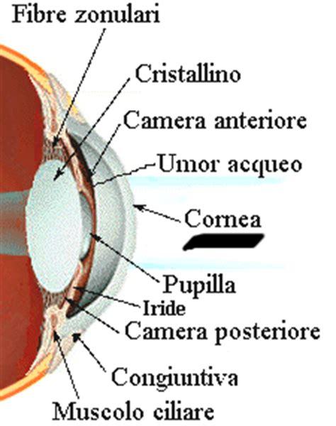 dolore all angolo interno dell occhio cheratiti iapb italia onlus