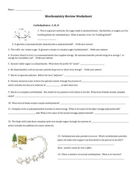 biochemistry worksheet biochemistry worksheet answers worksheets for school dropwin