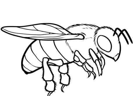 drone bee coloring pages kids coloring pages pinterest