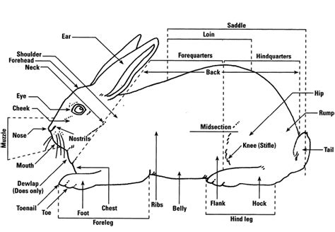 p spot diagram rabbit information worksheets image copyright ohio