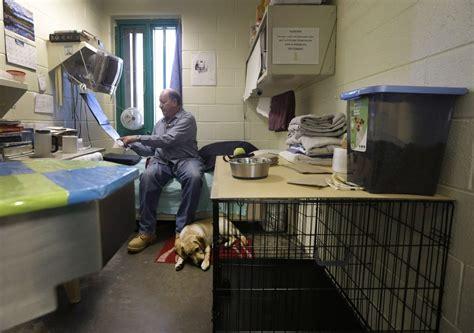 colorado prison dogs puppy future service dogs to maximum security prison photos