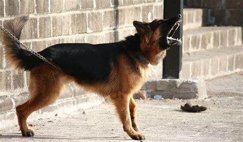 alt deutsche hutte hond photo gratuite berger allemand chien barking image