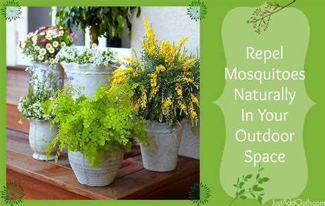 repel mosquitoes naturally with plants just add cloth