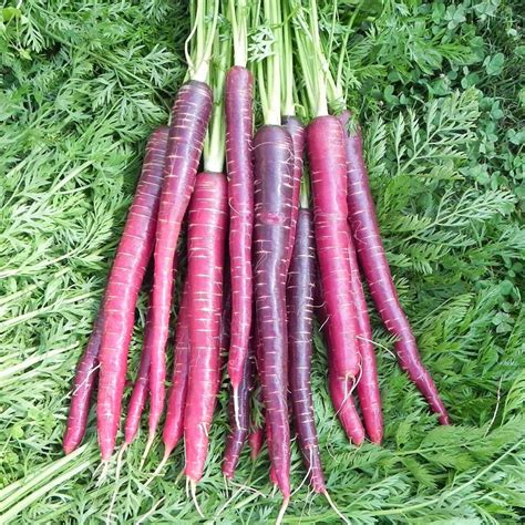 the carrot purple and other curious stories of the food we eat rowman littlefield studies in food and gastronomy books purple carrots