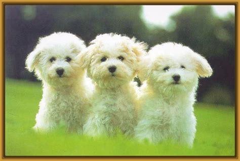 imagenes de animales lindos y tiernos ver imagenes de perritos tiernos lindos imagenes de