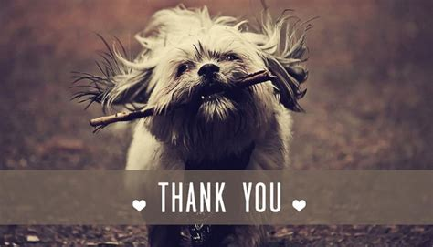 one mind dogs thank you onemind dogs
