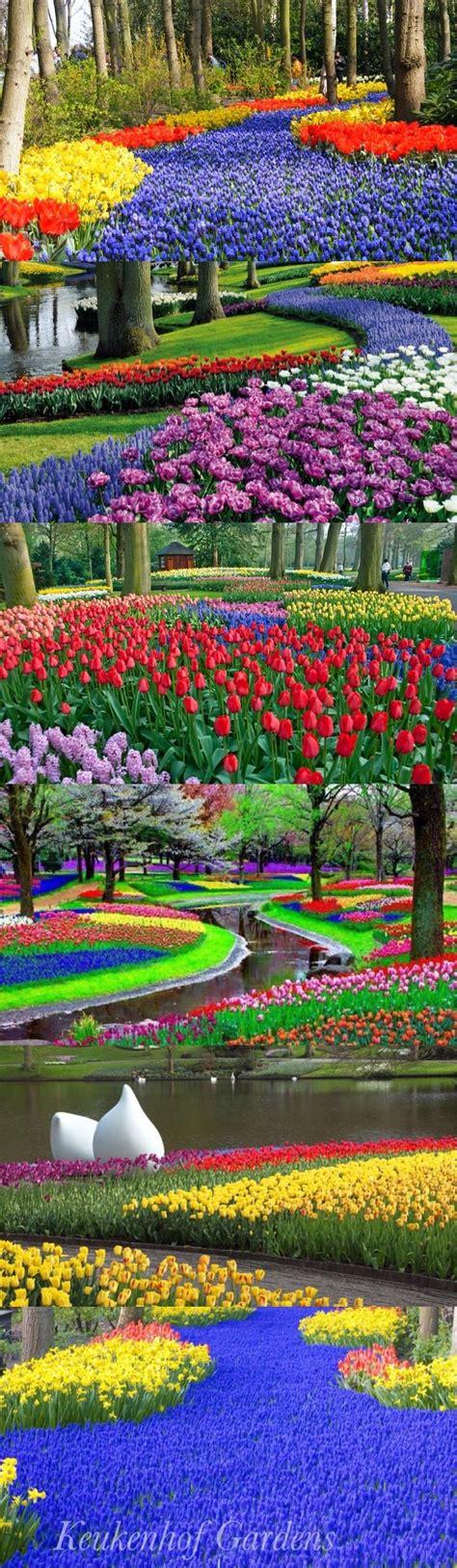17 Best Images About Keukenhof On Pinterest Gardens The Flower Garden In Amsterdam