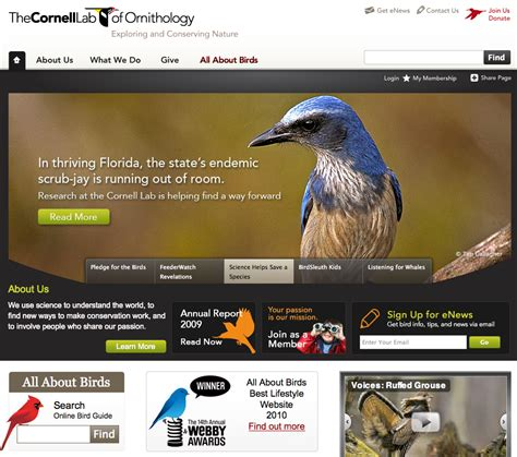 best 28 cornell bird website 10 best ideas about