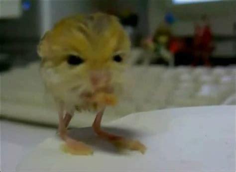imagenes de animales extraños reales animales extra 241 os jerbos egipcios youtube