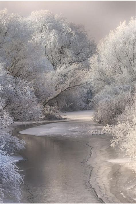beautiful winter snowy white countryside winter trees water reflection