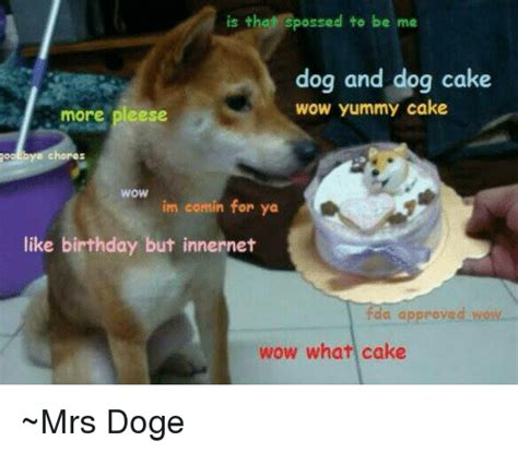 Birthday Cake Dog Meme - birthday cake dog meme 28 images birthday dog meme
