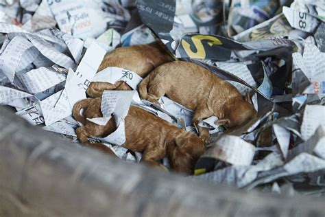 puppy in korean 57 dogs rescued from farm in south korea daily mail