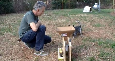 automatic thrower for dogs diy diy automatic launcher petdiys