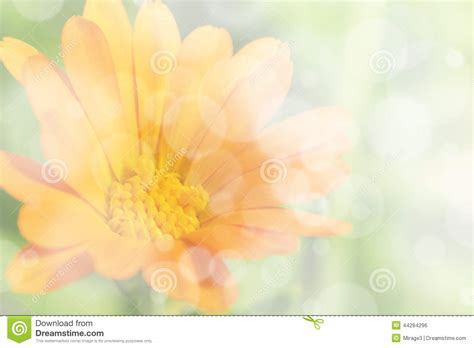 colorful flowers picture orange flowers in bloom light soft orange floral background stock photo image 44284296