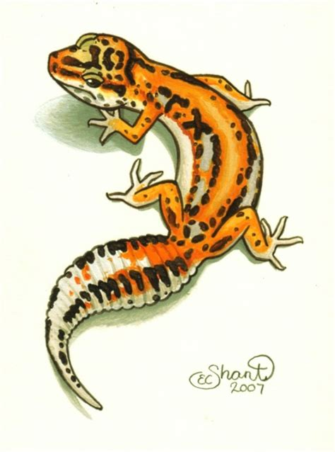 leopard gecko tattoo design by shanticameron on deviantart