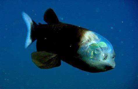 imagenes extrañas del mar 26 extra 241 as criaturas de mar que parecen salidas de pelicula