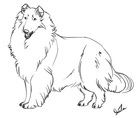 coloring page border collie bordercollie free colouring pages