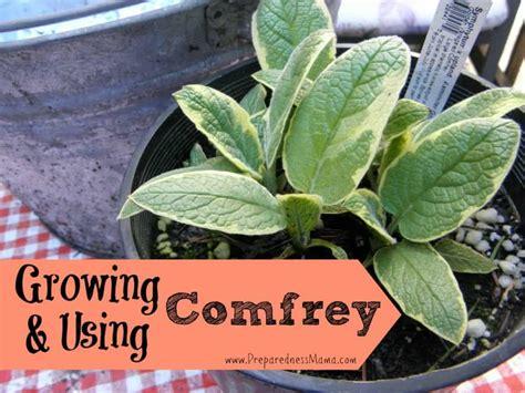fantastic reasons  growing   comfrey